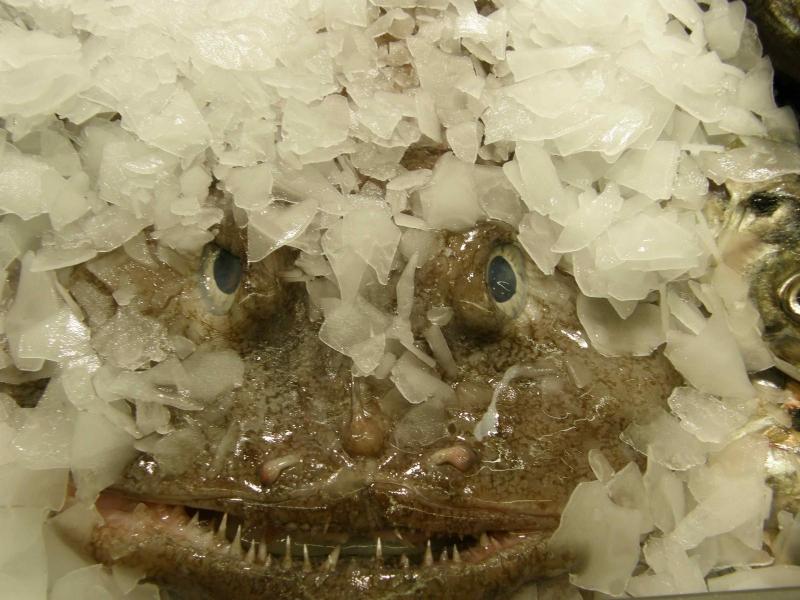 Morski potwór