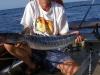 Ryba z Atlantyku