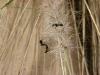 Mrówki z Mogan