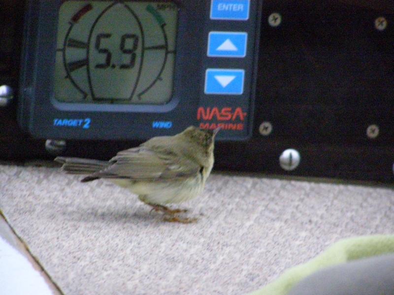 Ptaszek w gościnie